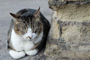 800px-Sleeping_Cat_in_Largo_di_Torre_Argentina,_Rome